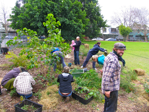 mulberry planting