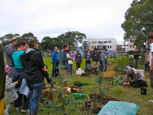 tree planting demo4