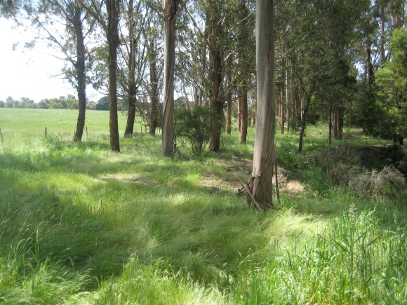 A combination Shelterbelt and Timber planting along a waterway
