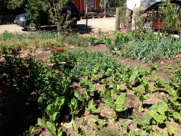 Productive Huerto in Hualqui